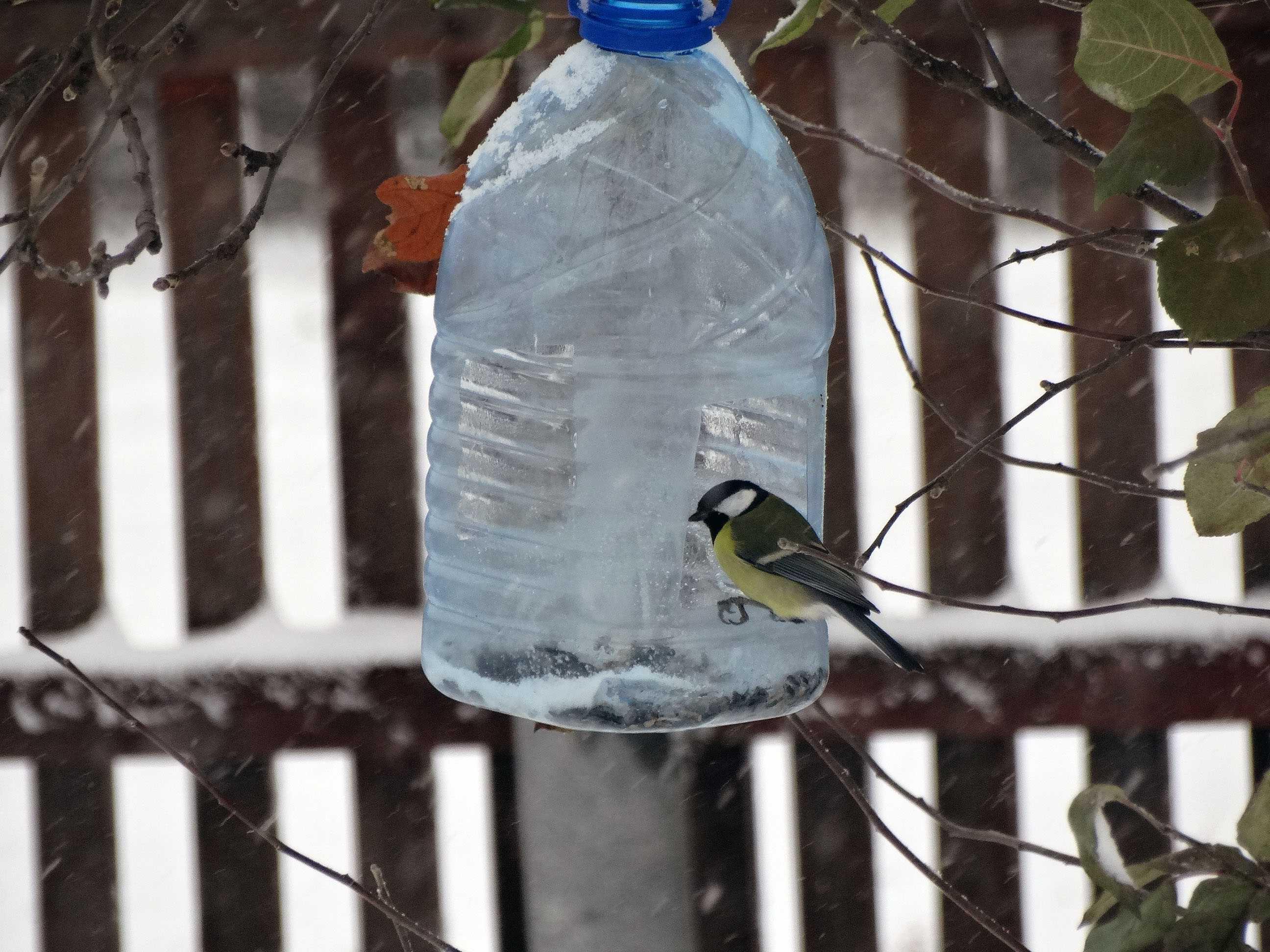 Кормушка для птиц из пластиковой бутылки – коробочка идей и мастер-классов